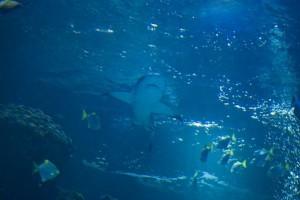 Морской аквариум. Стоит посетить.