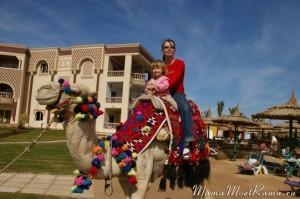 Отдых на верблюдах в Египте