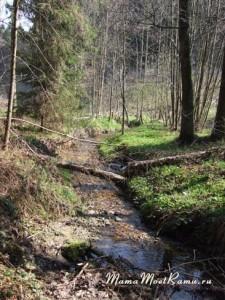 На охоту за медведем, гербарием и приключениями –  креативные идеи для прогулок по лесу.