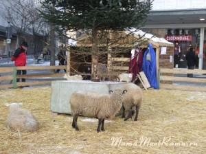 Вертеп с живыми животными на немецкой площади.