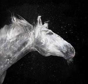 Лошади - лекари. Иппотерапия
