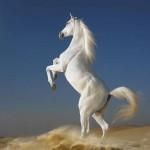 Заниматься конным спортом - это здорово и интересно!